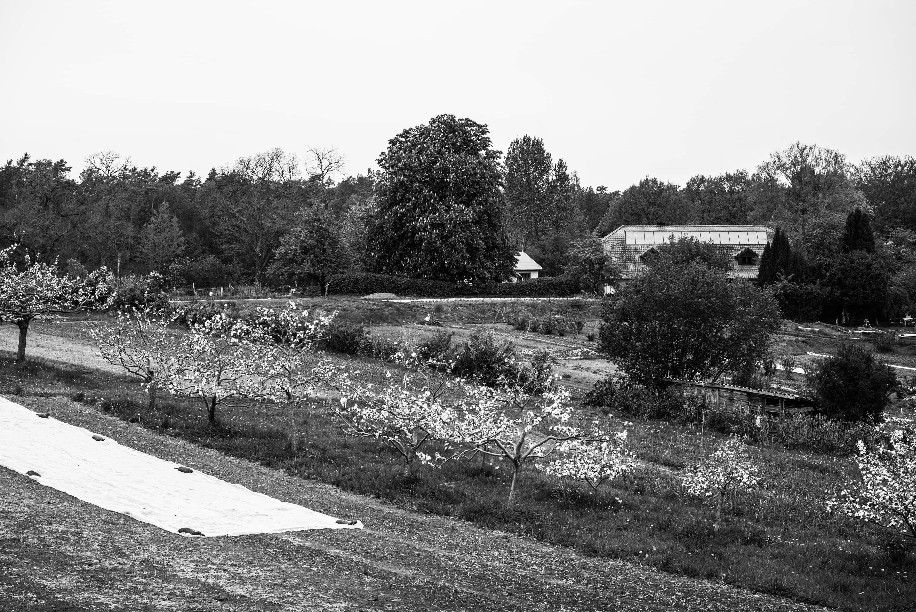 Auf etwa 1,5 Hektar wachsen auf der Marienhöhe Gemüse, Kräuter und Blumen